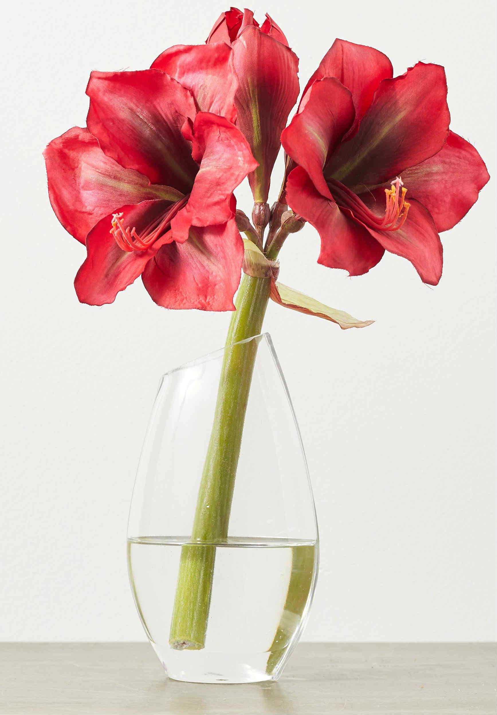 как срезать цветы амараллиса