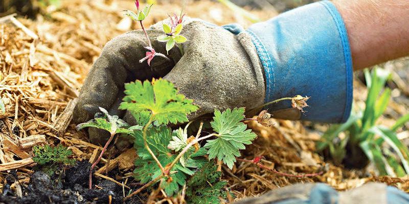 Как правильно мульчировать почву и зачем это нужно
