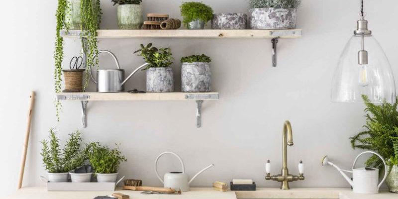 7 лучших комнатных растений для кухни
