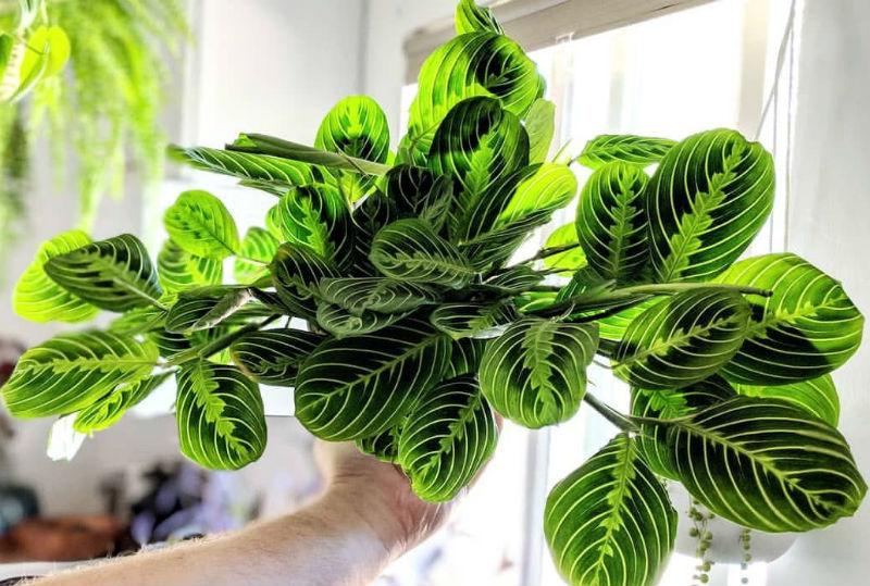 16 самых модных комнатных растений 2020 года
