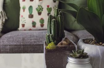Выращивание и уход за кактусами в домашних условиях