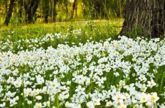 Сад в естественном стиле: выращивание, уход, защита