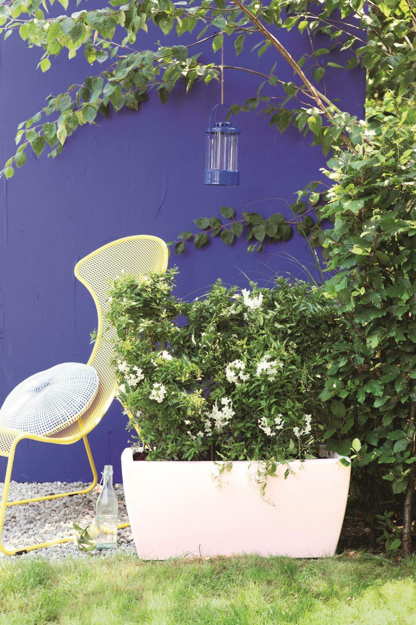 Какое значение имеют цвета в саду?