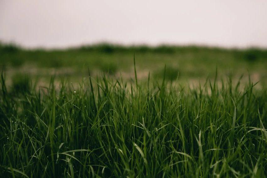 Правильный посев травы обеспечит ее пышный рост и правильное цветение.