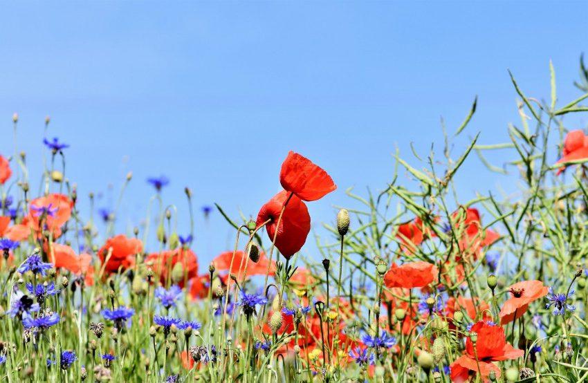 Полевые цветы в саду