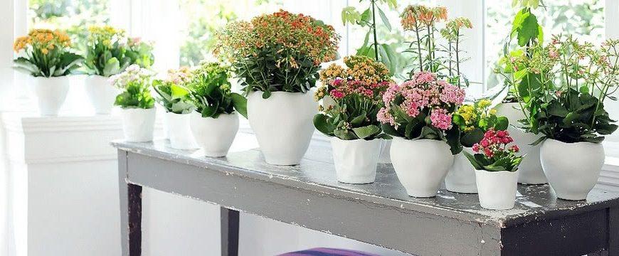 Цветущие растения в нашем доме
