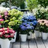 Красочный сад
