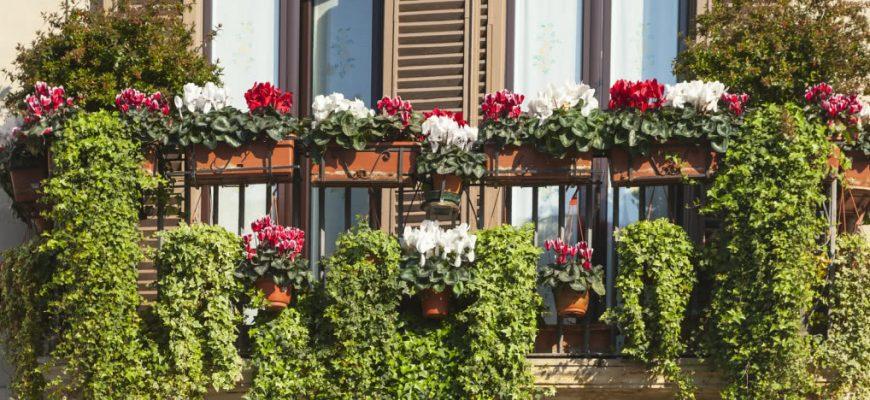 Балкон цветов