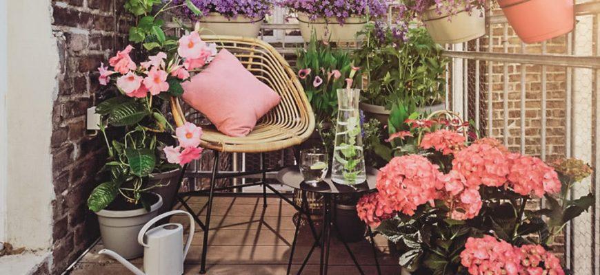 Какие цветы лучше размещать на балконе?