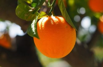 Обрезка плодовых деревьев - 3 важнейших правила