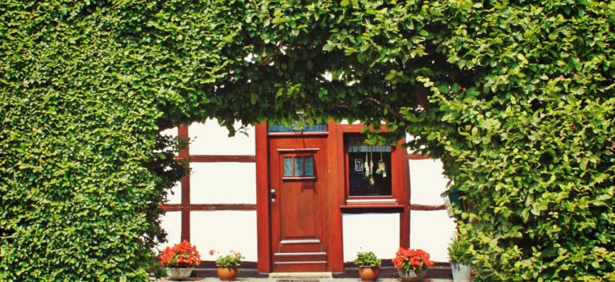 Многолетние декоративные деревья и кустарники в саду