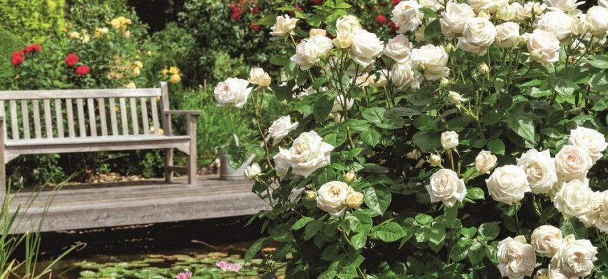 Какие цветы для тенистого и солнечного сада?