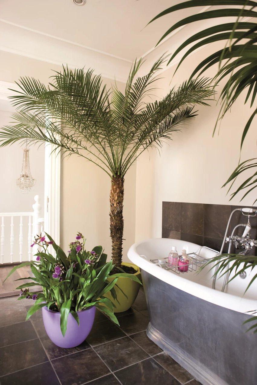 Комнатные цветы в ванной