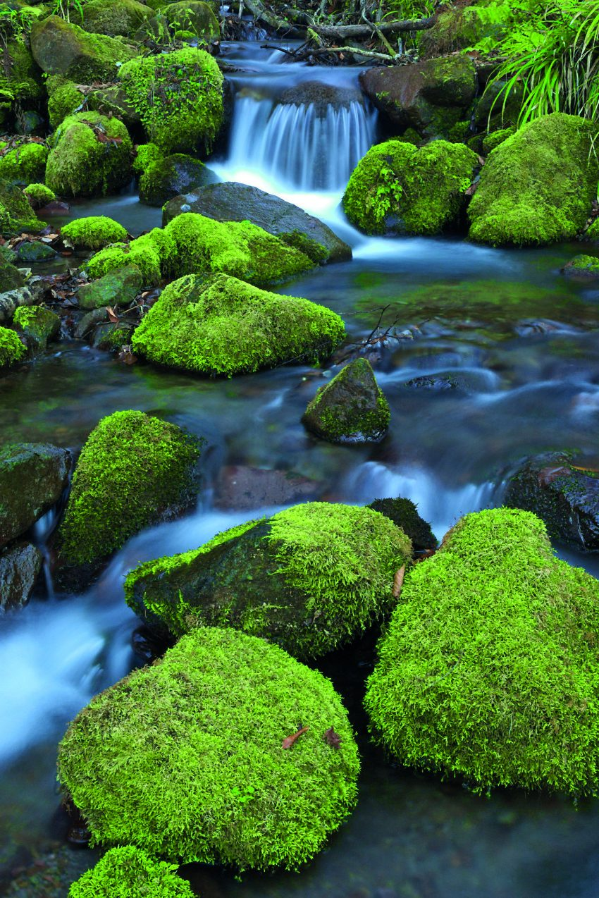 Вода в японском саду.