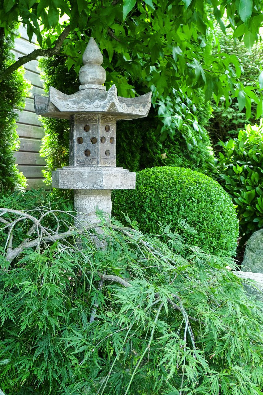 Декоративные кустарники для дачи - самшит