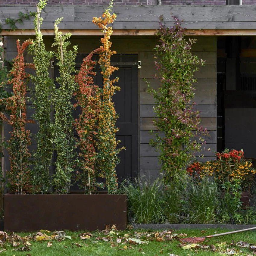 Декоративные кустарники для стены дома
