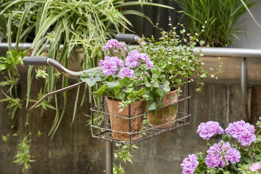 цветочная композиция из герани с другими растениями