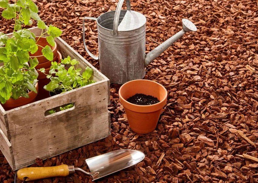 Инструменты, необходимые для посадки фруктовых деревьев осенью