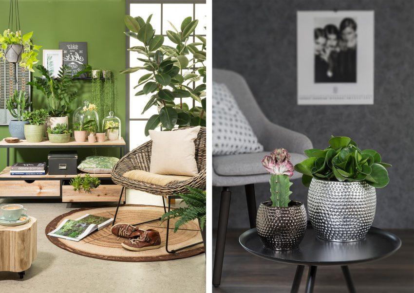 кактус, черный стол, серое кресло, цветы под стеклом, плетеное кресло, стол из ствола, большие лиственные цветы
