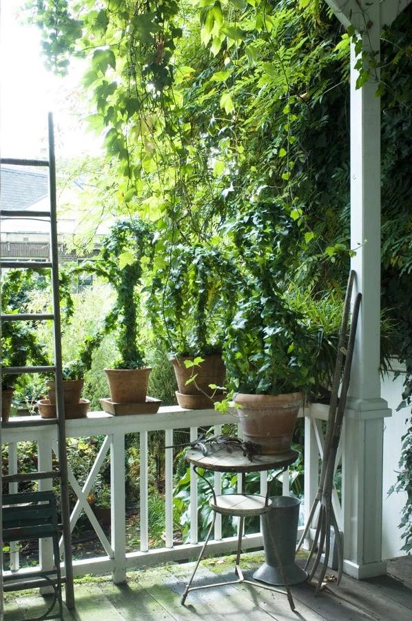 Если у нас нет сада, а есть только небольшой балкон, мы можем сажать виноградные лозы в горшках.