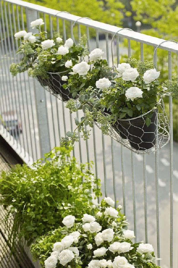 Белые розы на балконе