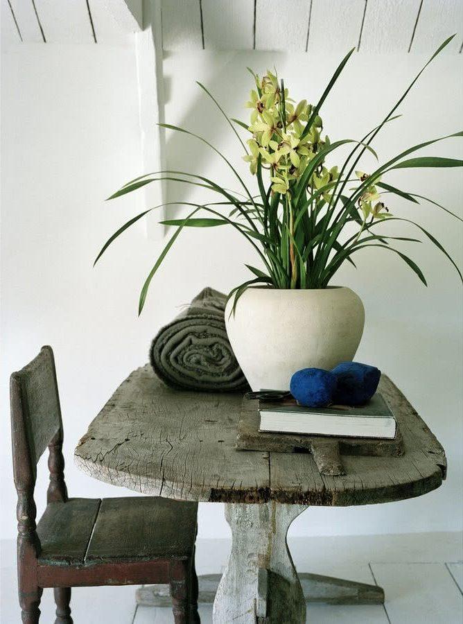 Орхидеи из рода Цимбидиум