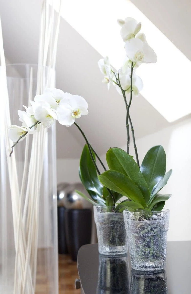 Стеклянные вазы для орхидей