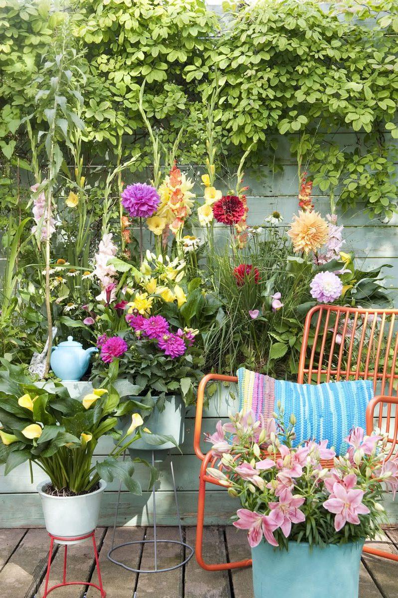 Цветущие луковицы - сущность лета