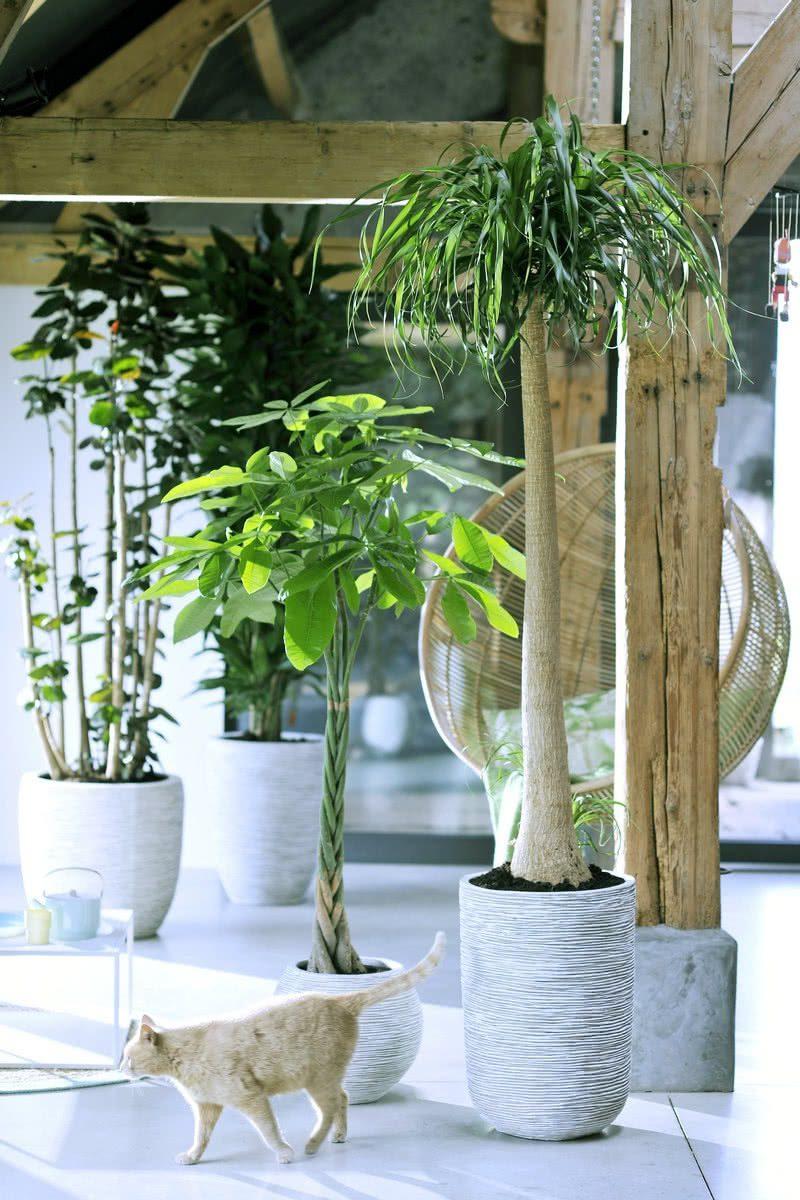 Самодельные экзотические деревья