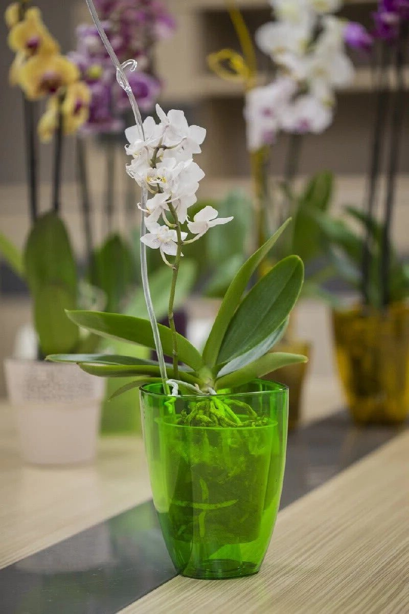 Прозрачная ваза и подставка для орхидеи