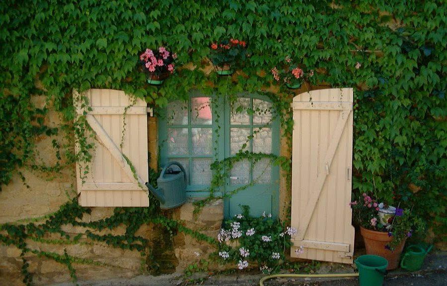 Лоза - отличное решение на террасе, ведь лазая по стенам, они используют места, недоступные для других растений.