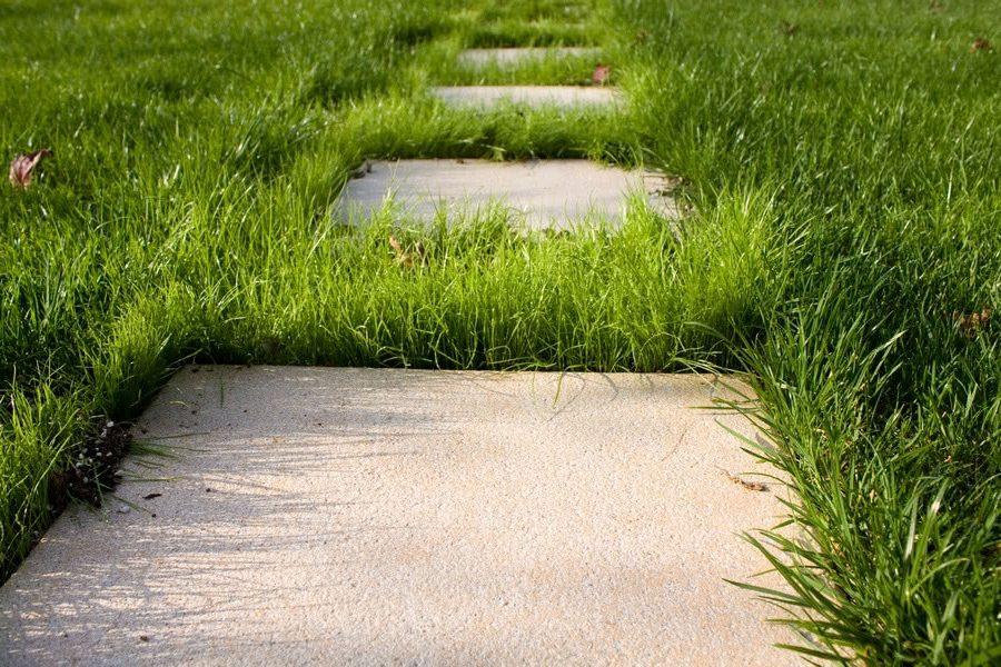 трава между бетонными плитами