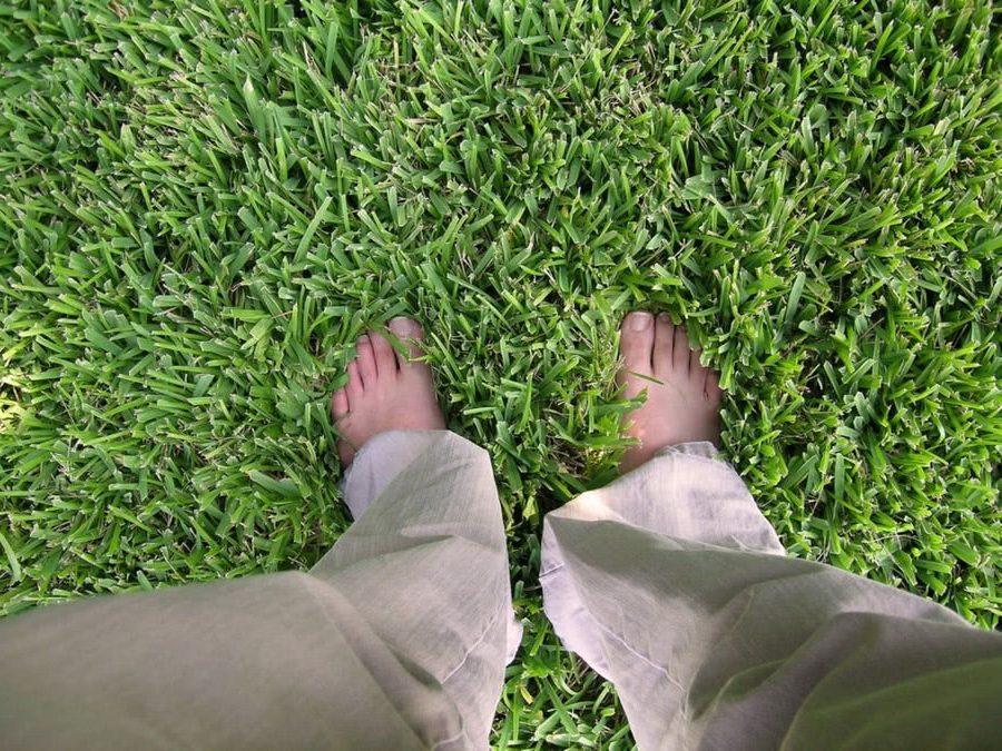 зеленый газон под ногами