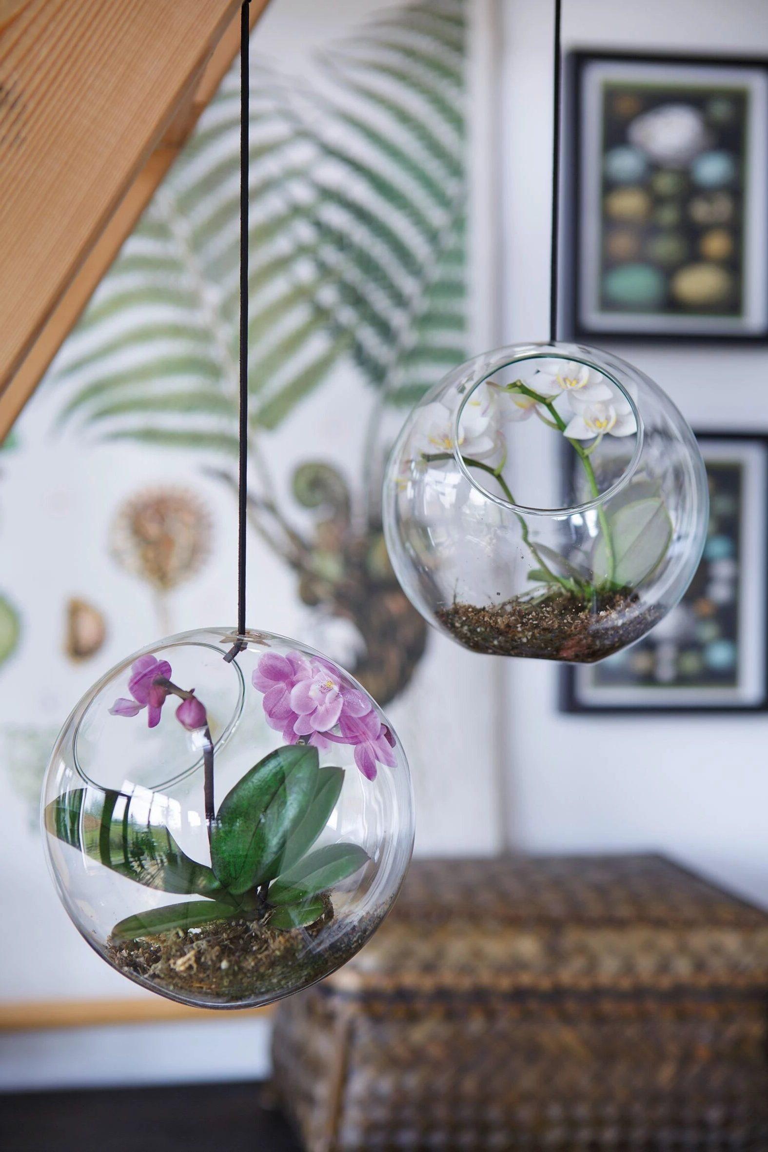 Орхидеи - идеальные цветы для стеклянных горшков