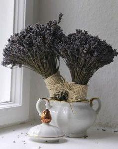 Сушеная лаванда в вазе