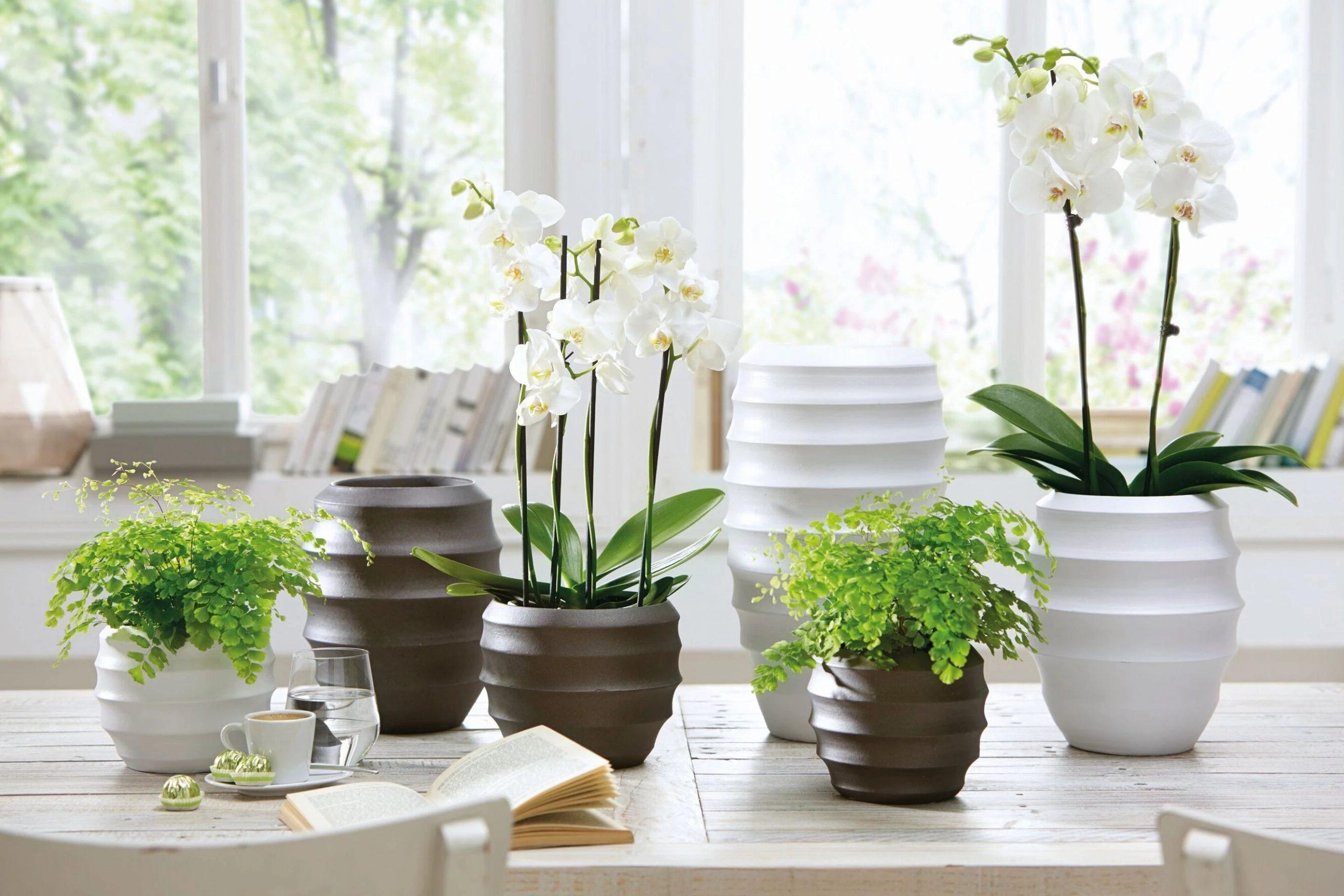Богатый фаленопсис с белыми цветами и нежными папоротниками