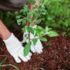 Как сажать фруктовые деревья поздней осенью и защитить их?